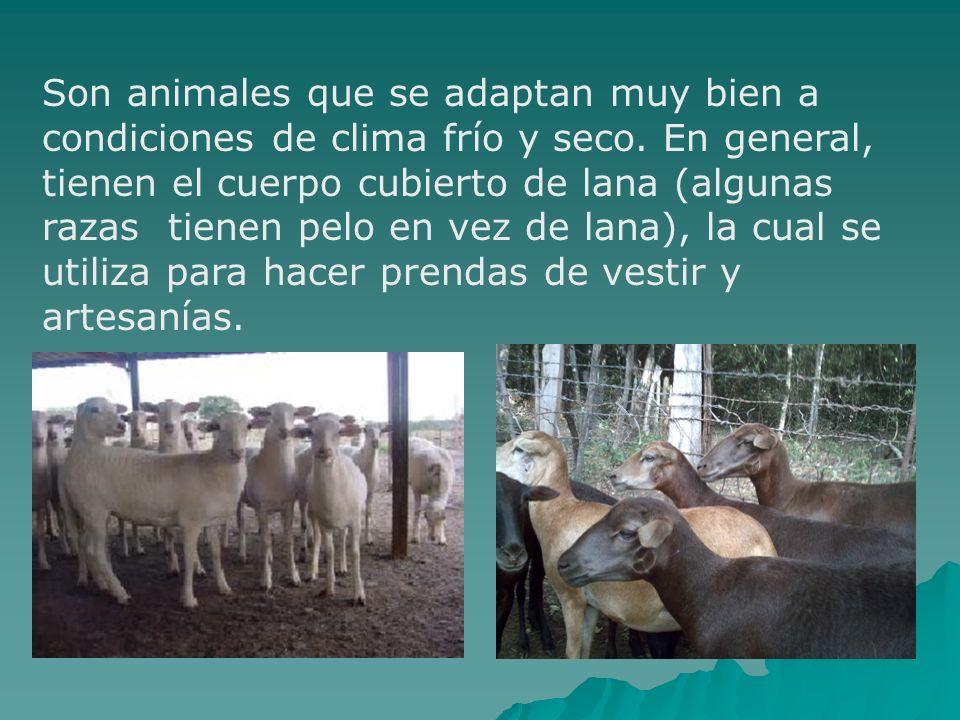 Son animales que se adaptan muy bien a condiciones de clima frío y seco.