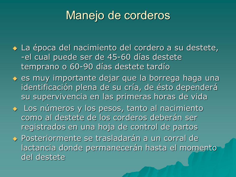 Manejo de corderos La época del nacimiento del cordero a su destete, -el cual puede ser de 45-60 días destete temprano o 60-90 días destete tardío.