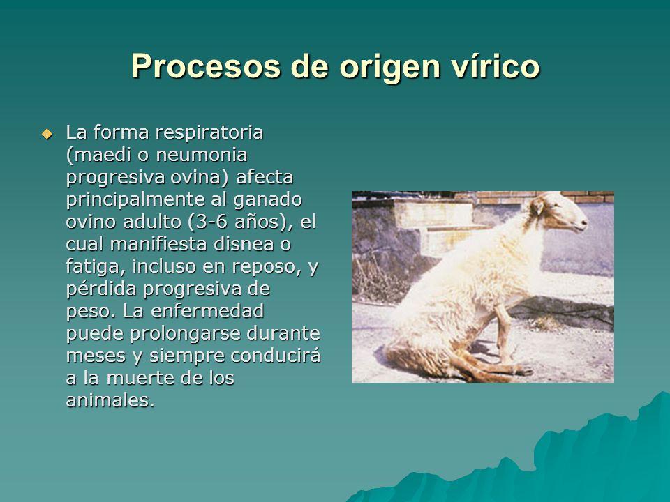 Procesos de origen vírico