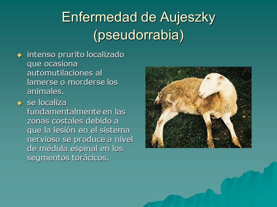 Enfermedad de Aujeszky (pseudorrabia)