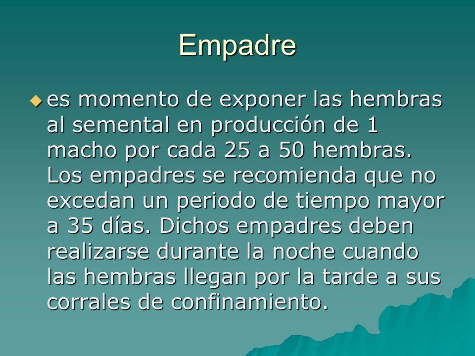 Empadre