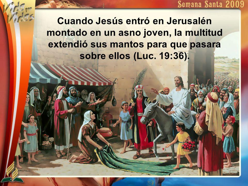 Cuando Jesús entró en Jerusalén montado en un asno joven, la multitud extendió sus mantos para que pasara sobre ellos (Luc.