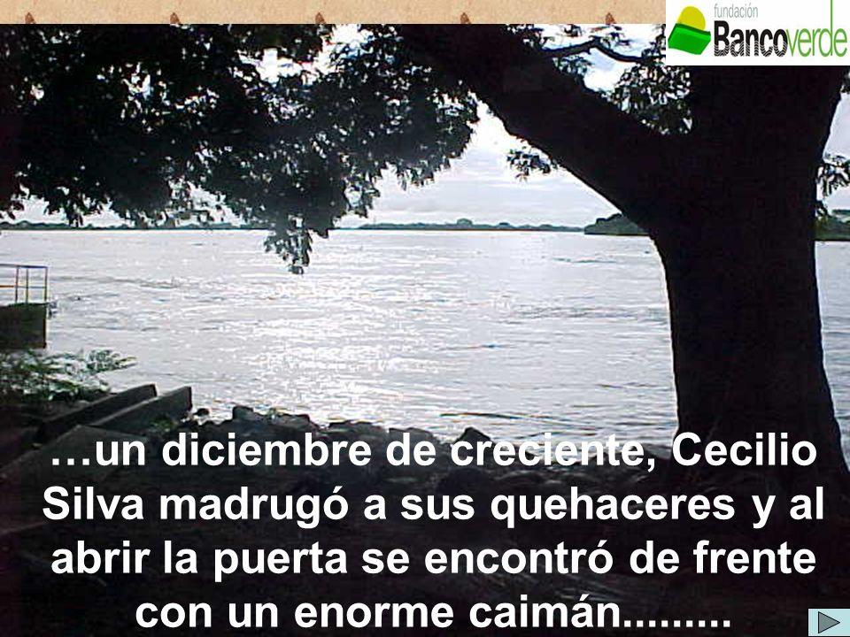 …un diciembre de creciente, Cecilio Silva madrugó a sus quehaceres y al abrir la puerta se encontró de frente con un enorme caimán.........