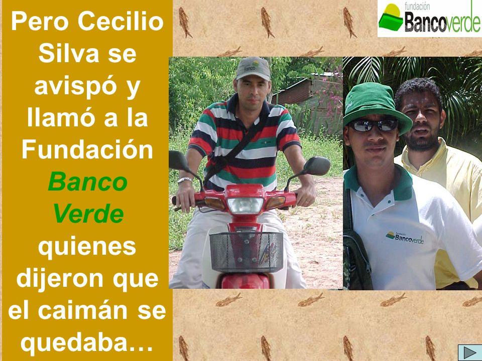 Pero Cecilio Silva se avispó y llamó a la Fundación Banco Verde quienes dijeron que el caimán se quedaba…