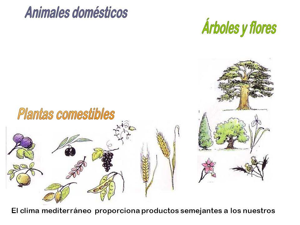 Animales domésticos Árboles y flores Plantas comestibles