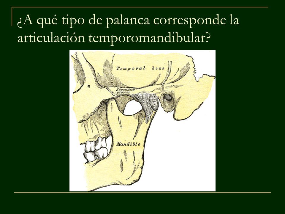 ¿A qué tipo de palanca corresponde la articulación temporomandibular