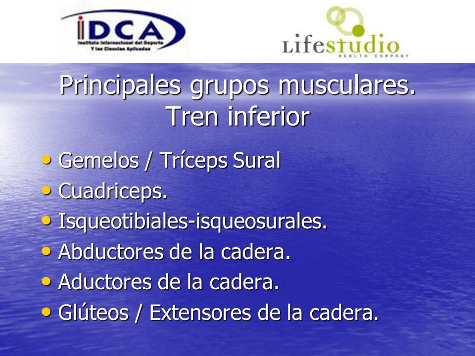 Principales grupos musculares. Tren inferior