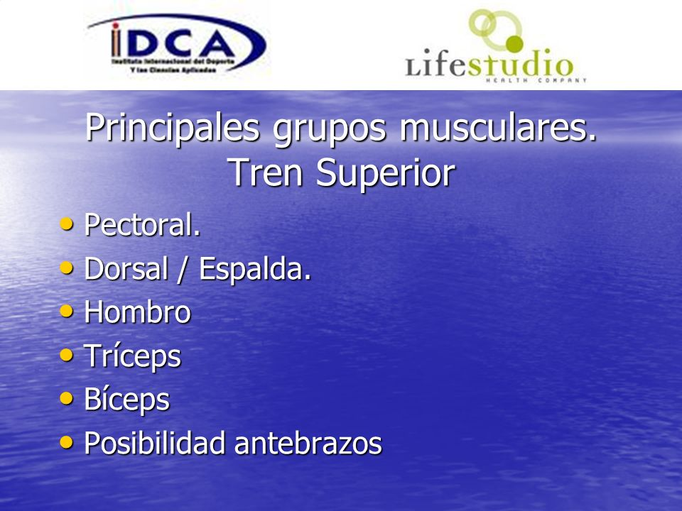 Principales grupos musculares. Tren Superior