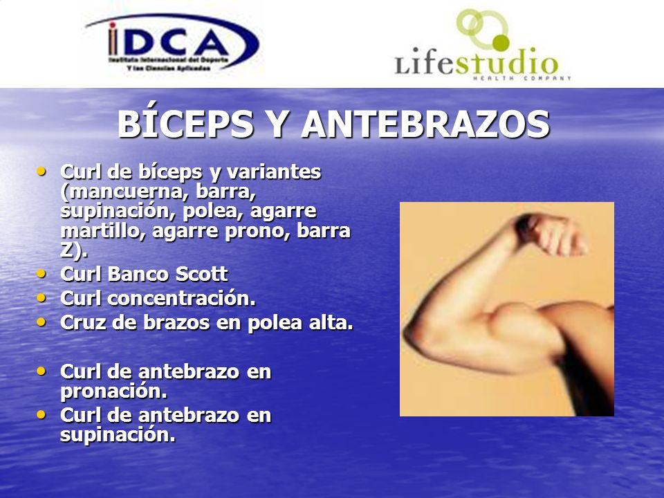 BÍCEPS Y ANTEBRAZOSCurl de bíceps y variantes (mancuerna, barra, supinación, polea, agarre martillo, agarre prono, barra Z).