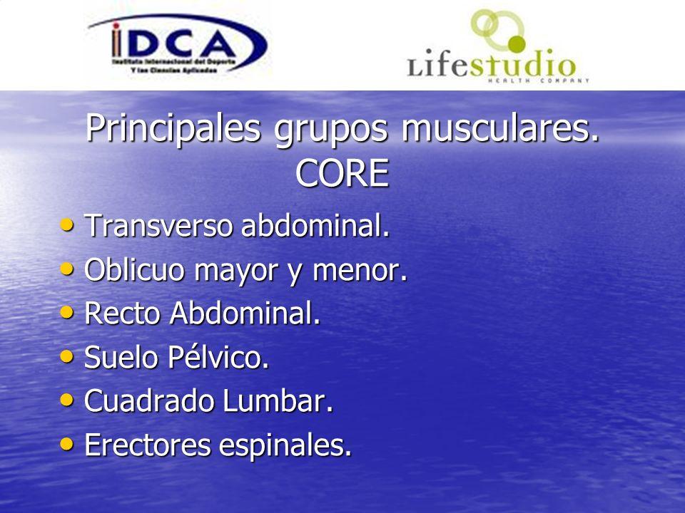 Principales grupos musculares. CORE