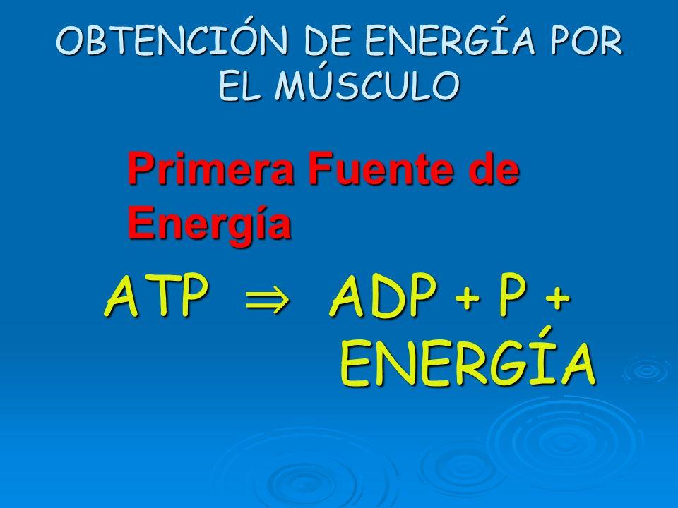 OBTENCIÓN DE ENERGÍA POR EL MÚSCULO
