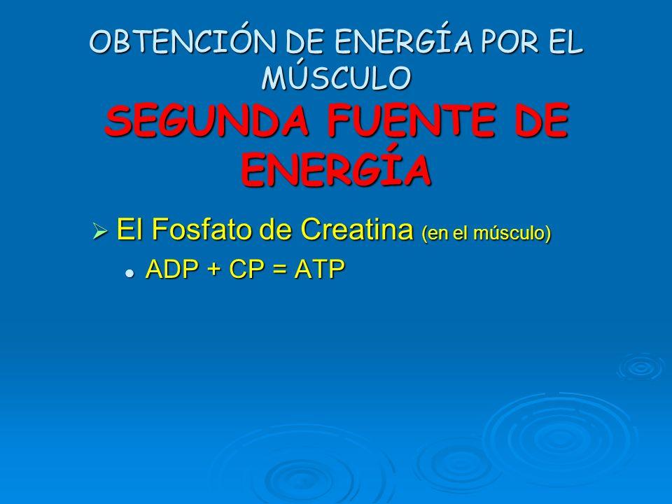 OBTENCIÓN DE ENERGÍA POR EL MÚSCULO SEGUNDA FUENTE DE ENERGÍA