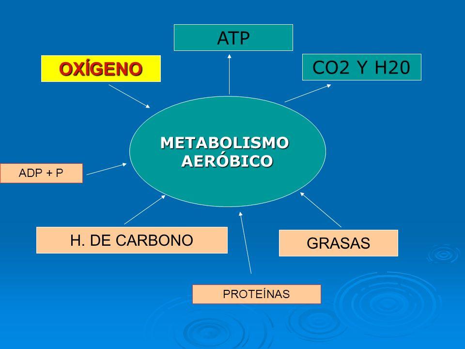 ATP CO2 Y H20 OXÍGENO METABOLISMO AERÓBICO H. DE CARBONO GRASAS