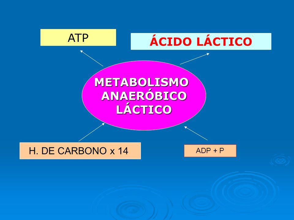 ÁCIDO LÁCTICO METABOLISMO ANAERÓBICO LÁCTICO