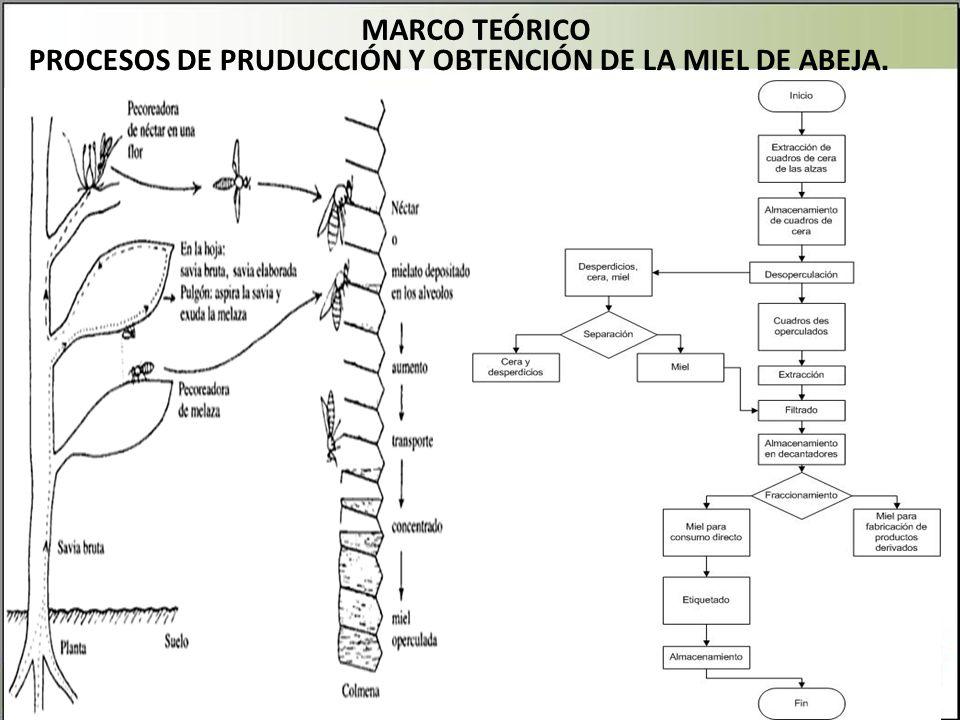 MARCO TEÓRICO PROCESOS DE PRUDUCCIÓN Y OBTENCIÓN DE LA MIEL DE ABEJA.
