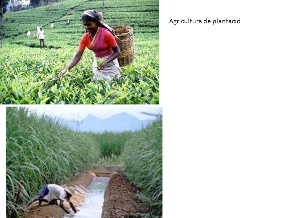 Agricultura de plantació