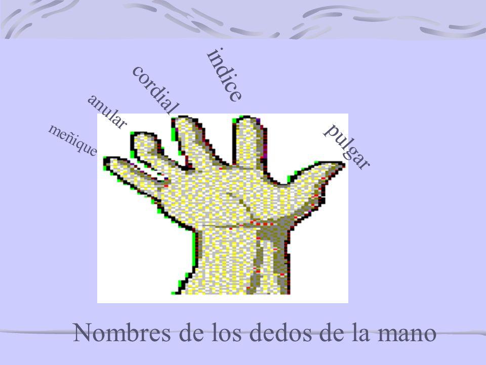 Nombres de los dedos de la mano