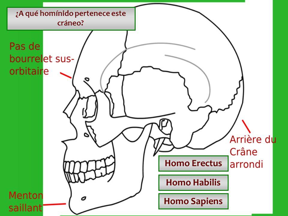¿A qué homínido pertenece este cráneo