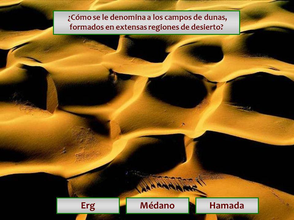 ¿Cómo se le denomina a los campos de dunas, formados en extensas regiones de desierto