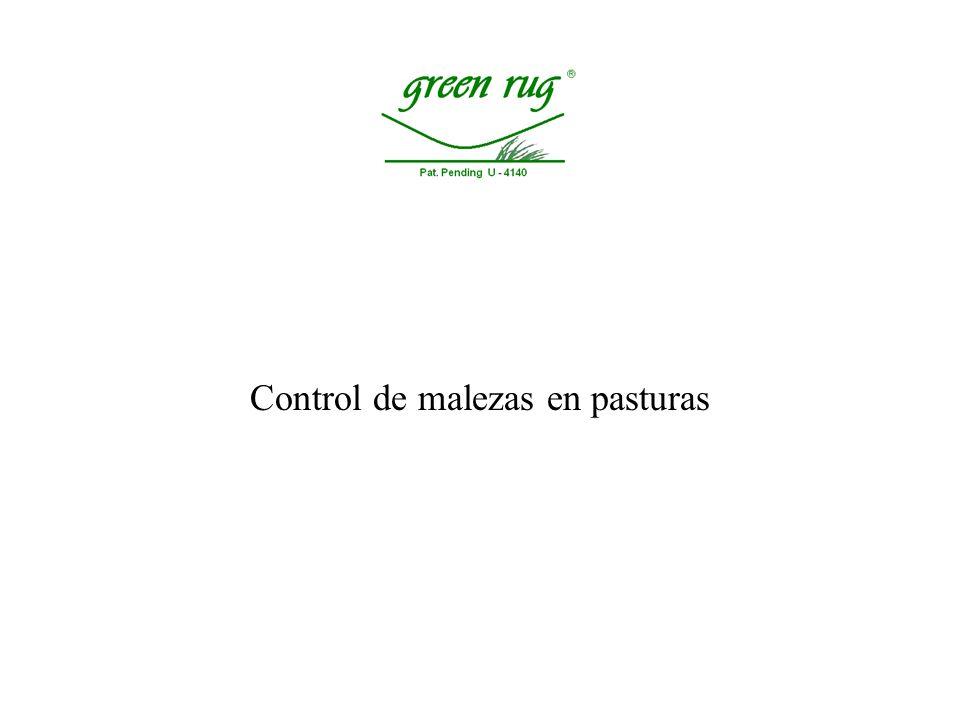 Control de malezas en pasturas