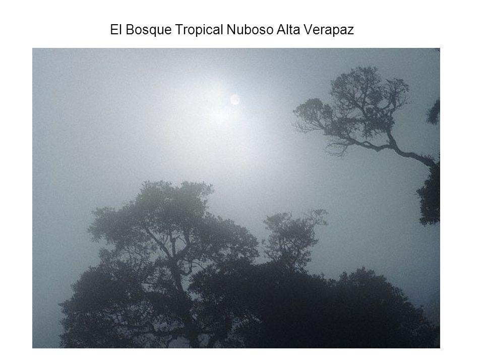 El Bosque Tropical Nuboso Alta Verapaz
