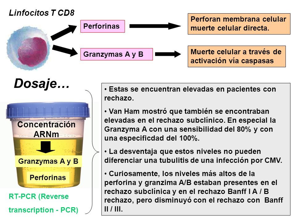 Dosaje… Linfocitos T CD8 Concentración ARNm