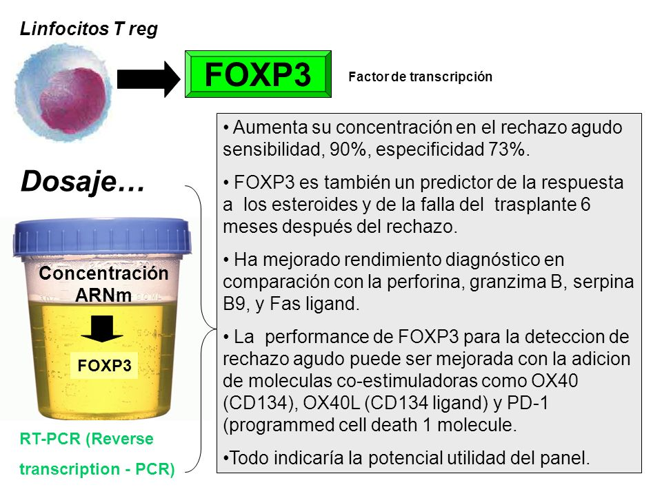 FOXP3 Dosaje… Linfocitos T reg