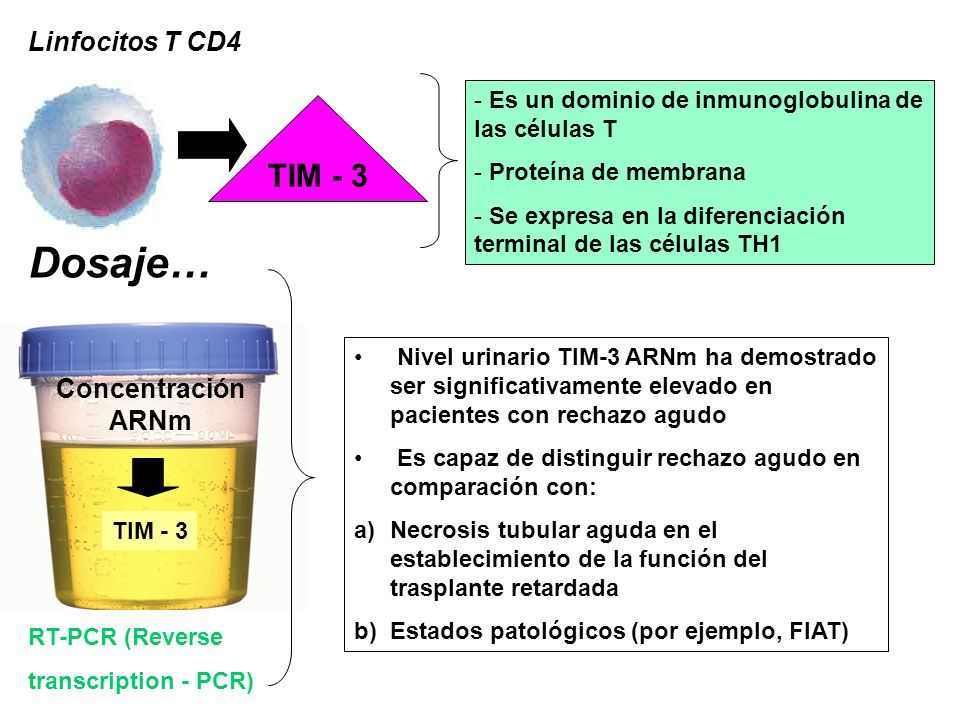 Dosaje… TIM - 3 Linfocitos T CD4 Concentración ARNm