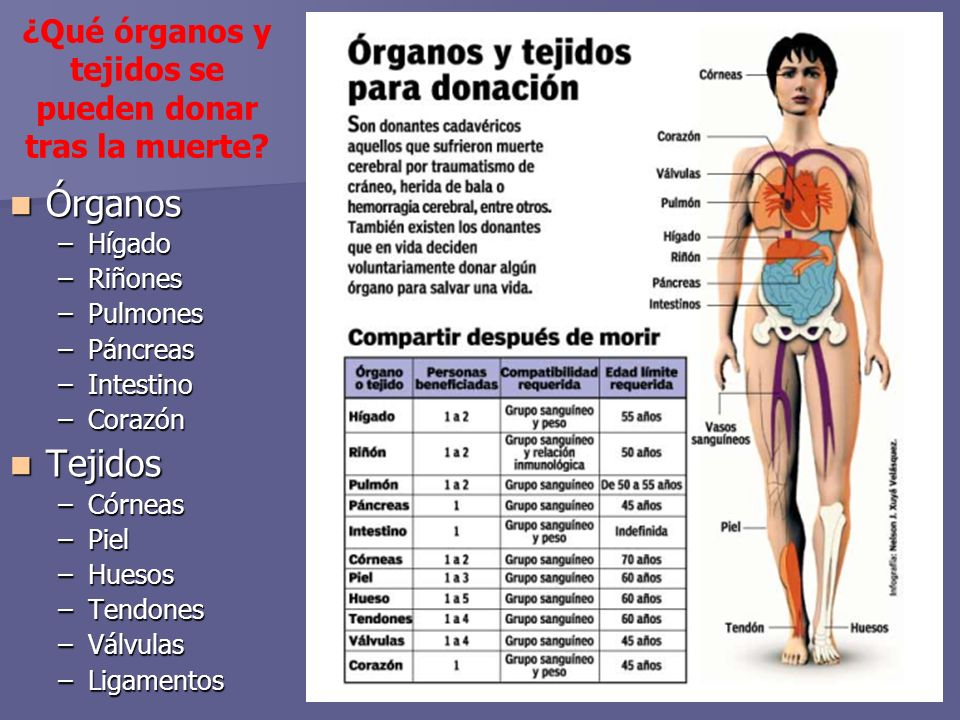 ¿Qué órganos y tejidos se pueden donar tras la muerte