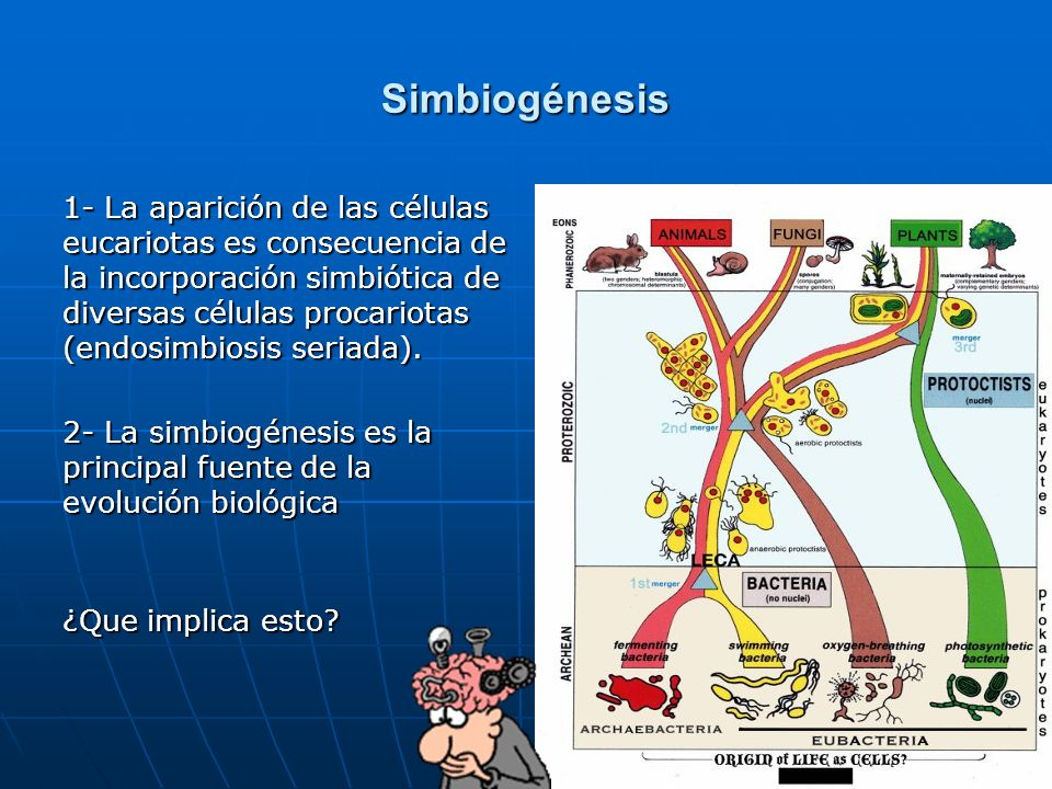 Simbiogénesis