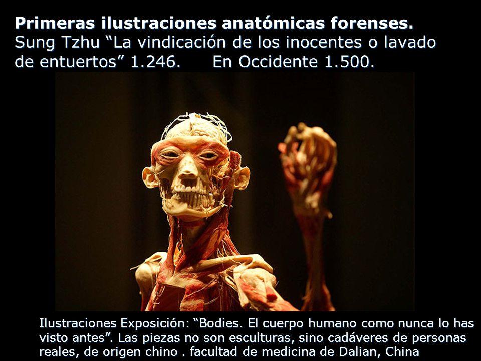 Primeras ilustraciones anatómicas forenses.