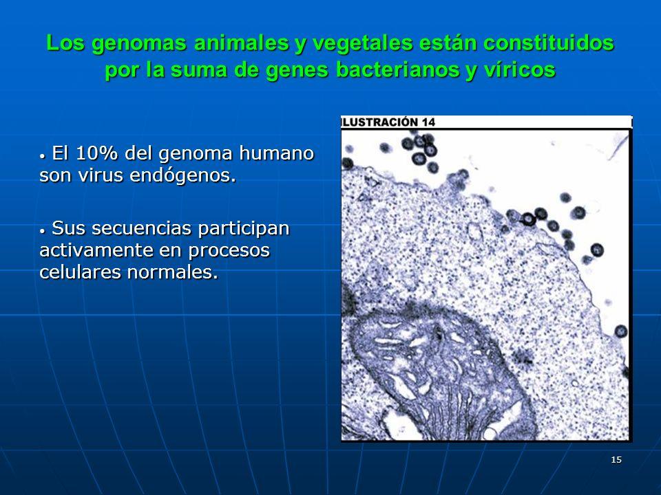 Los genomas animales y vegetales están constituidos por la suma de genes bacterianos y víricos