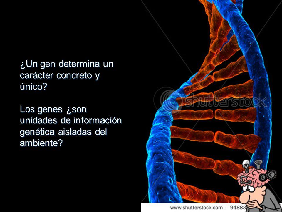 ¿Un gen determina un carácter concreto y único