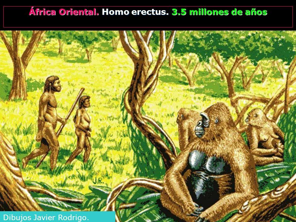 África Oriental. Homo erectus. 3.5 millones de años