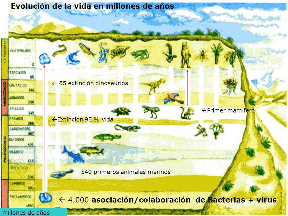 Evolución de la vida en millones de años