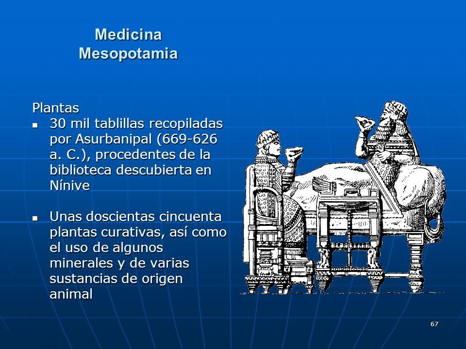 Medicina Mesopotamia Plantas