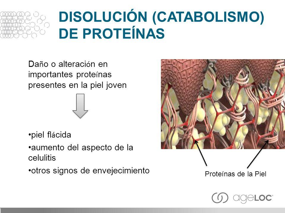 DISOLUCIÓN (CATABOLISMO) DE PROTEÍNAS