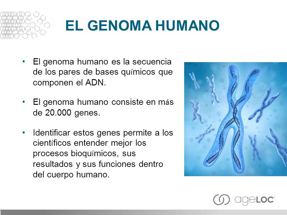 EL GENOMA HUMANO El genoma humano es la secuencia de los pares de bases químicos que componen el ADN.
