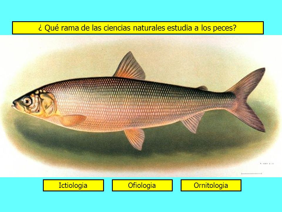 ¿ Qué rama de las ciencias naturales estudia a los peces