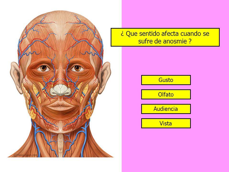 ¿ Que sentido afecta cuando se sufre de anosmie