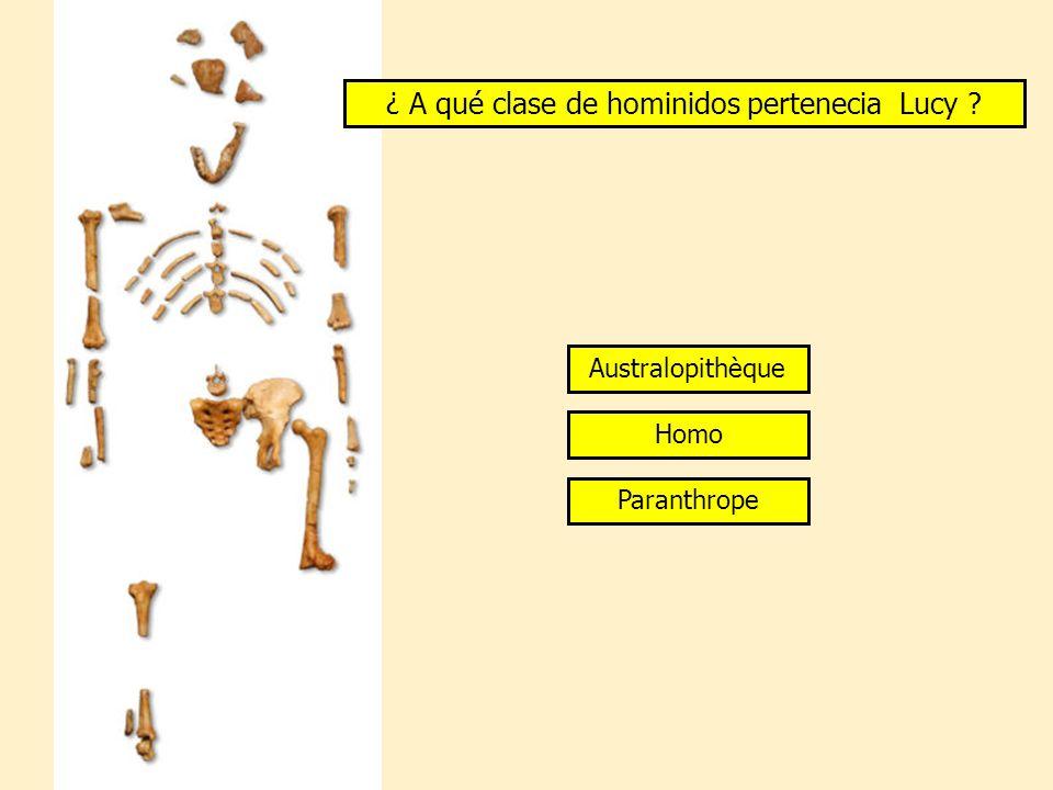 ¿ A qué clase de hominidos pertenecia Lucy
