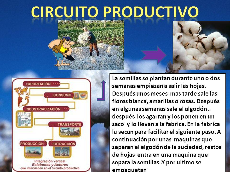 Circuito Productivo Del Algodon : Chaqueña ppt descargar