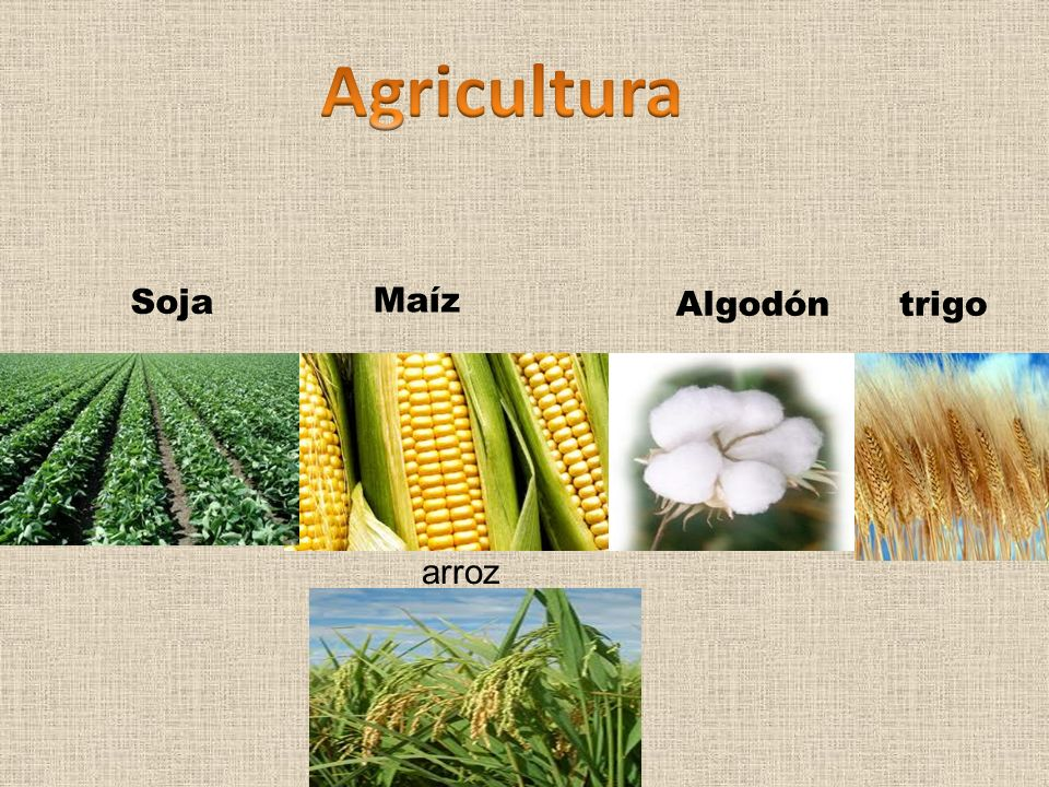 Agricultura Soja Maíz Algodón trigo arroz