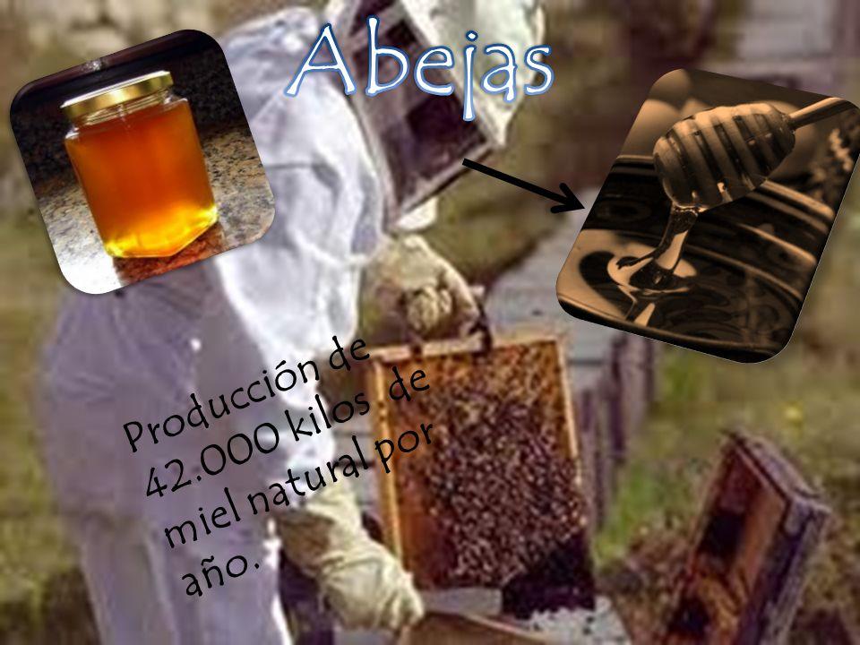 Abejas Producción de 42.000 kilos de miel natural por año.