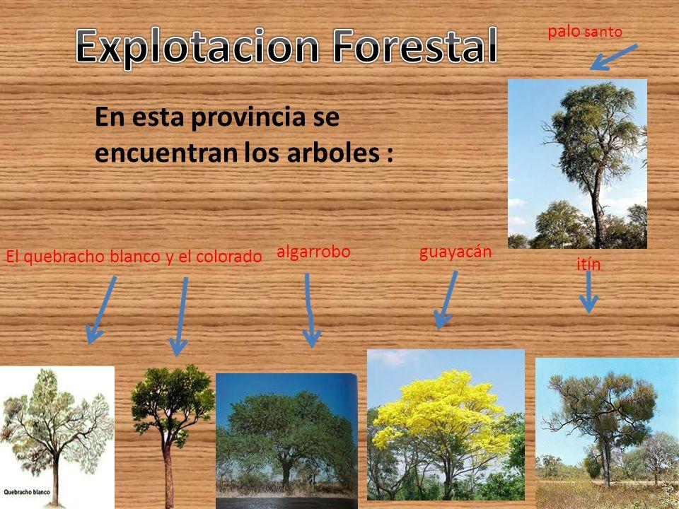 Explotacion Forestal En esta provincia se encuentran los arboles :