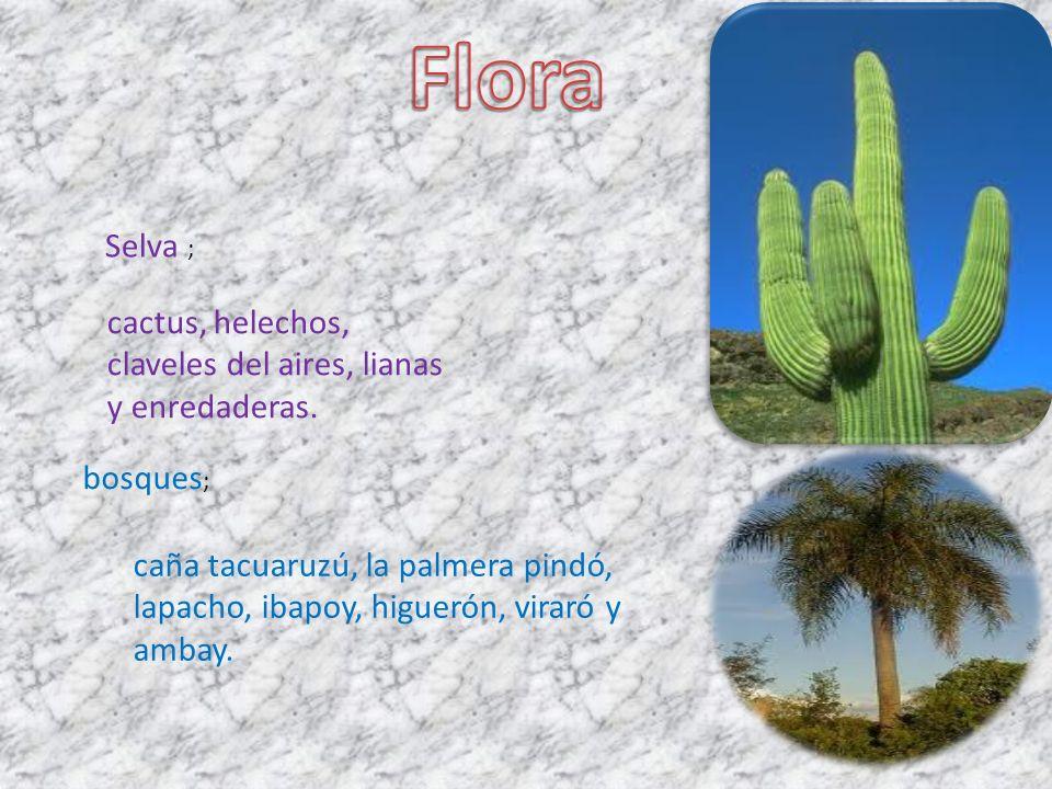 Flora Selva ; cactus, helechos, claveles del aires, lianas y enredaderas. bosques;