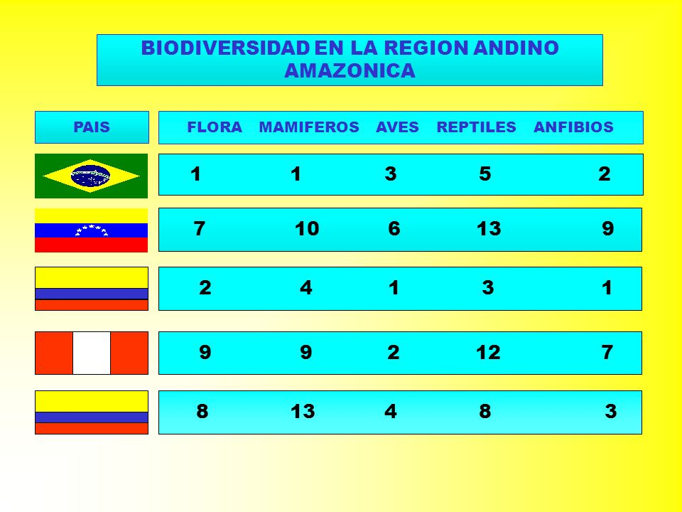 BIODIVERSIDAD EN LA REGION ANDINO AMAZONICA