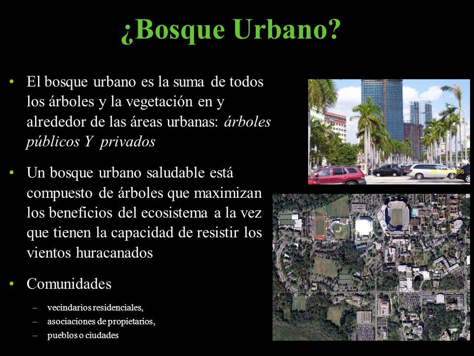 ¿Bosque Urbano El bosque urbano es la suma de todos los árboles y la vegetación en y alrededor de las áreas urbanas: árboles públicos Y privados.