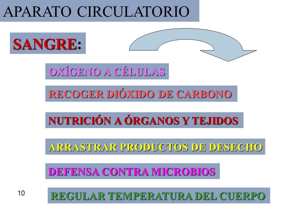 APARATO CIRCULATORIO SANGRE: OXÍGENO A CÉLULAS