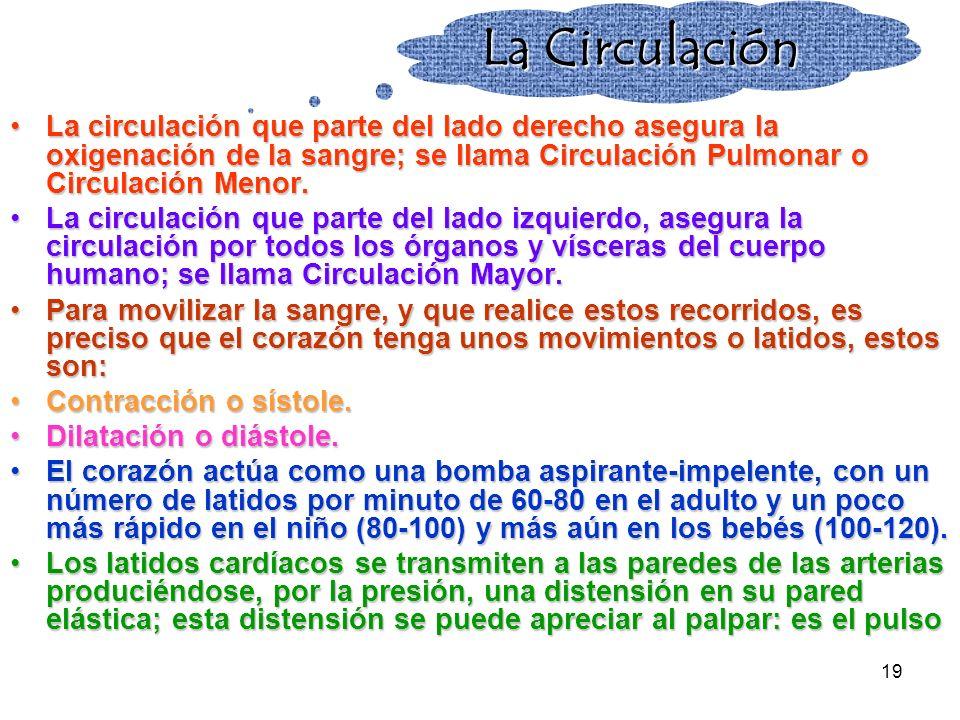 La Circulación La circulación que parte del lado derecho asegura la oxigenación de la sangre; se llama Circulación Pulmonar o Circulación Menor.